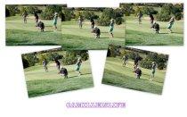 Golfin Blog